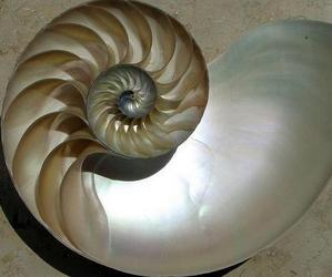 The-turbine-blades-inside-a-nautilus-shell-m