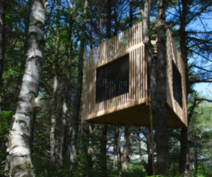 Tree-room-by-christopher-smith-architect-m