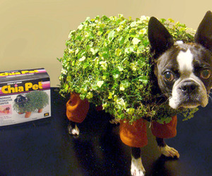 Turn-your-dog-into-a-chia-pet-for-halloween-m