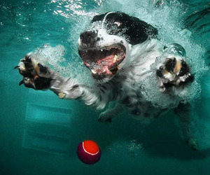 'Underwater Dogs,' Photographs by Seth Casteel