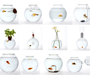 Unusual-blown-glass-fishbowls-m