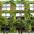 Vertical-garden-looks-refreshing-s