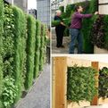 Vertical-gardening-everything-you-wanted-to-know-s