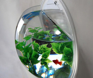 Wall-mounted-fish-tank-m