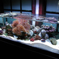 Zeroedge-aquariums-s