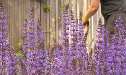 Pollinatorpathway2