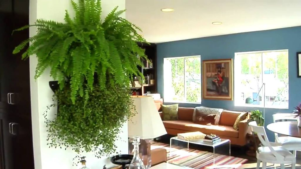 Learn How to Make Your Own Living Wall