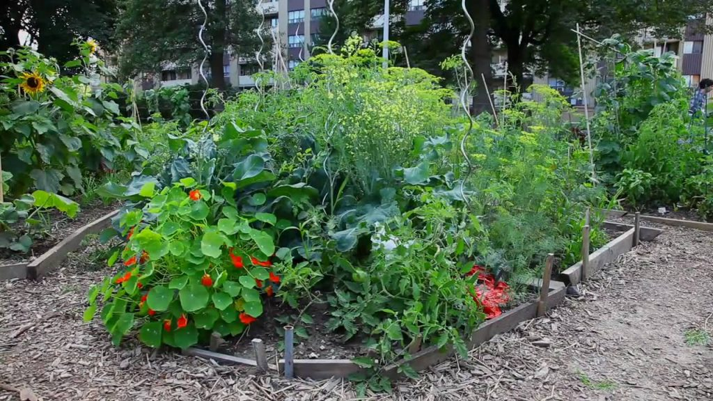 Live Green Toronto – Starting a Community Garden