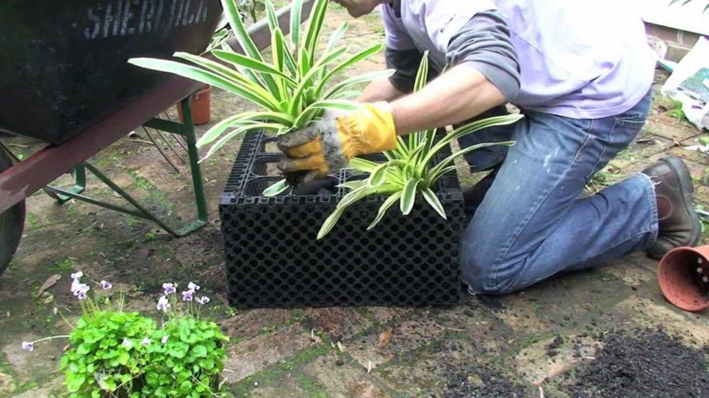 Create a vertical garden or greenwall