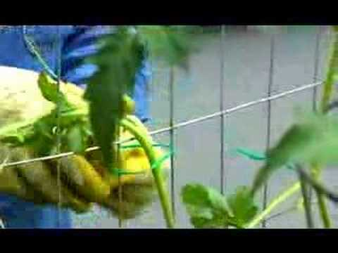 Garden Girl TV: Vertical Gardening Two