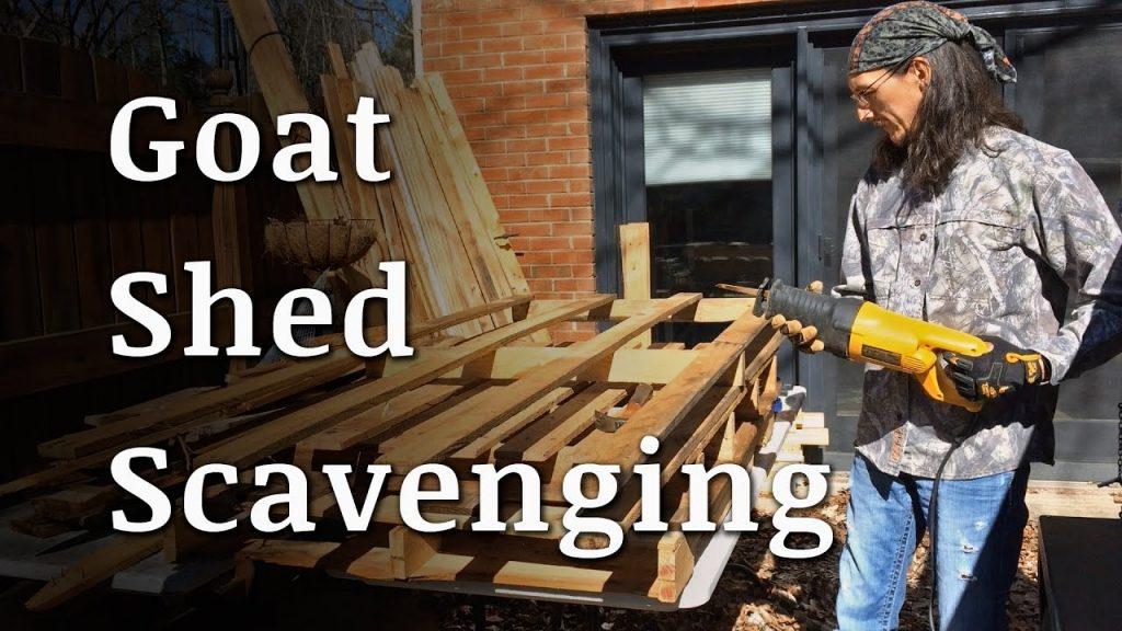 Scavenging for a Goat Shelter