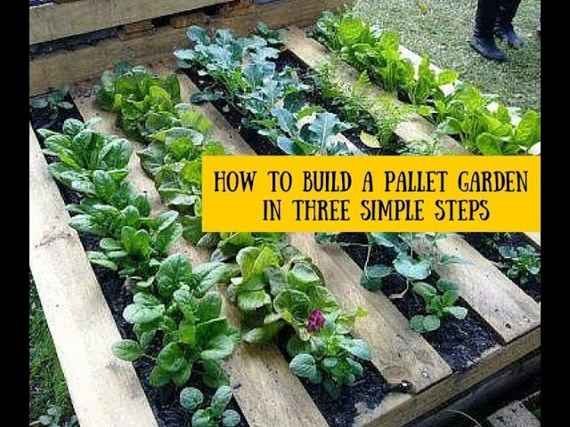 Turn a pallet into a beautiful garden—in…