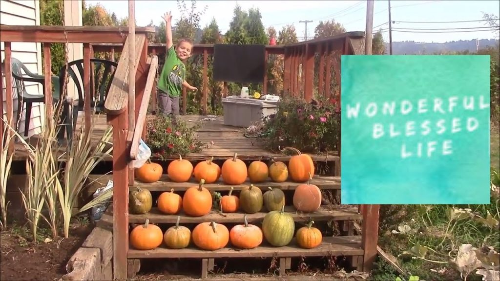 pumpkin harvest and some great ideas for diy pallet projects