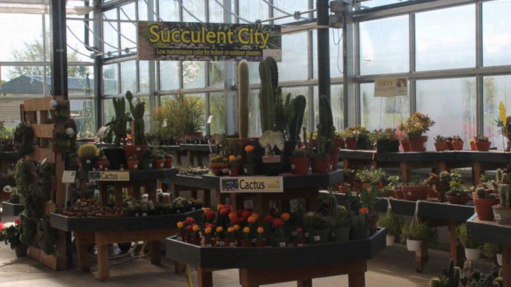 Wilson's Garden Center: 2017