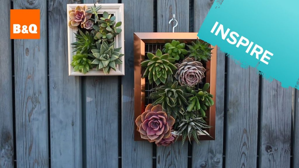Make a living succulent picture