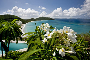 100PondBay-Floral.jpg