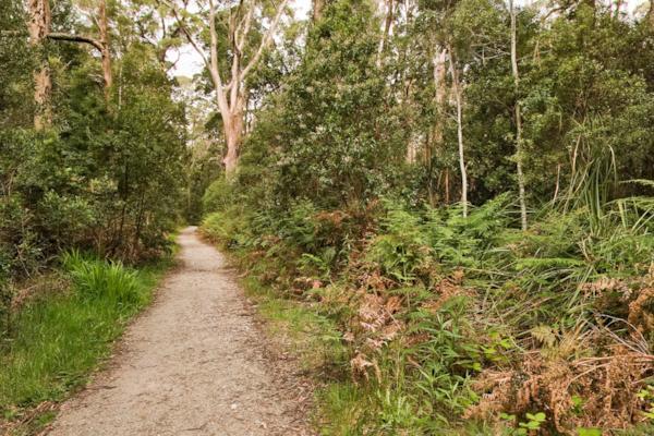Hogarth Falls Track