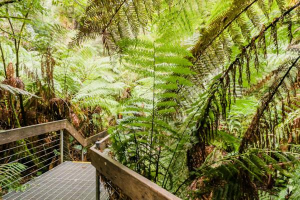 Mt. Donna Buang Rainforest Walkway