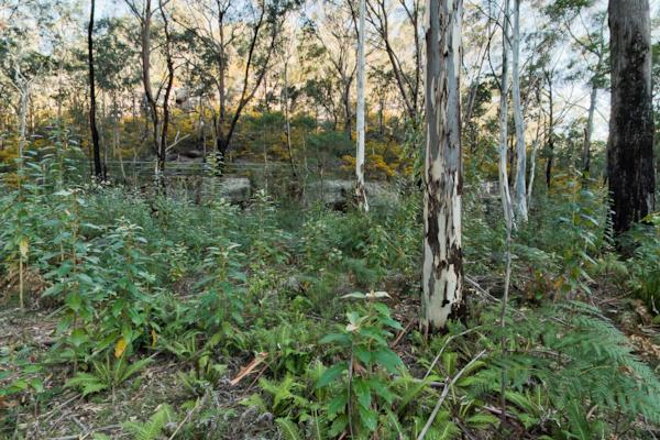 GBMWHE Bluegum Trail