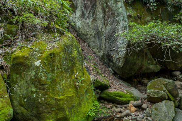Canarvon Gorge