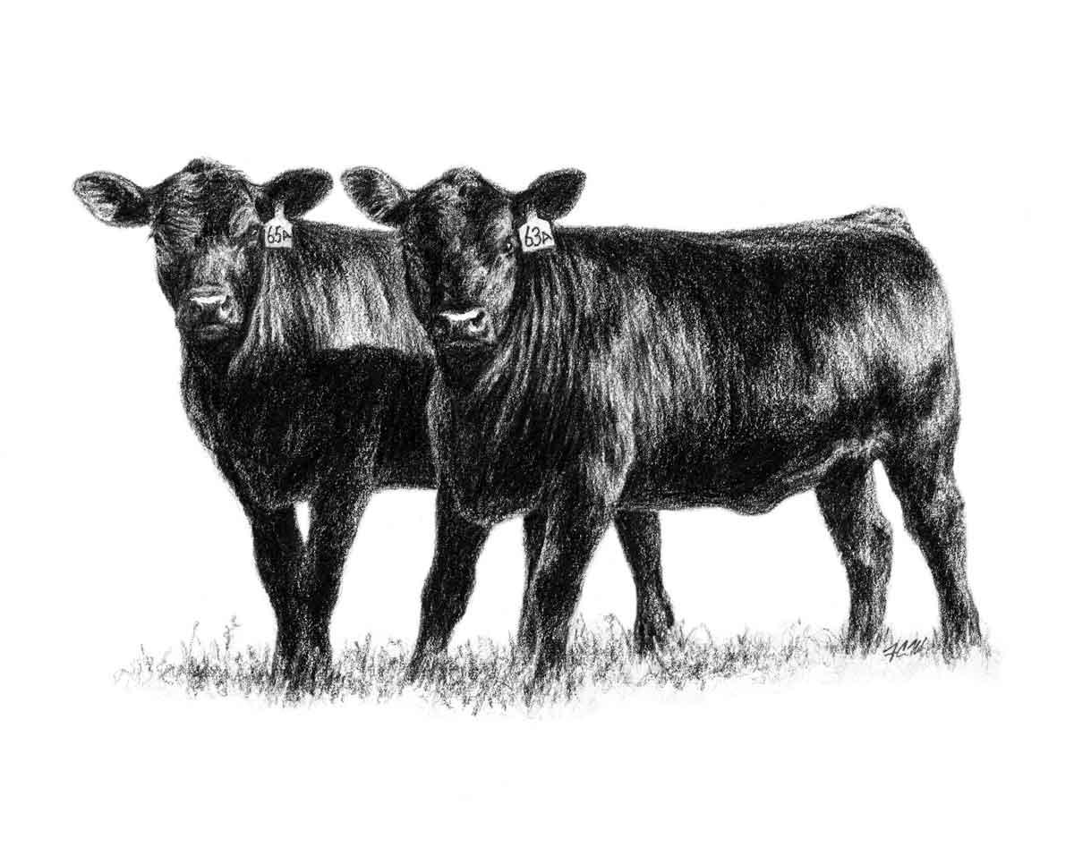 Green City Livestock Marketing, LLC - Homepage