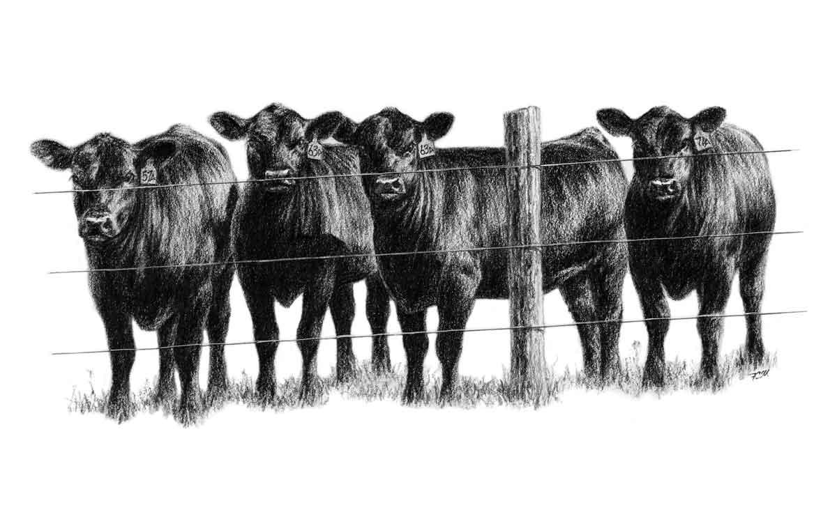 green city livestock marketing llc homepage
