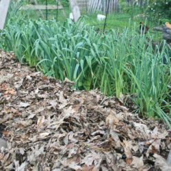 Get Your Mulch On!