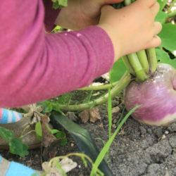 Nurtured by Nature Booklist: The Enormous Turnip