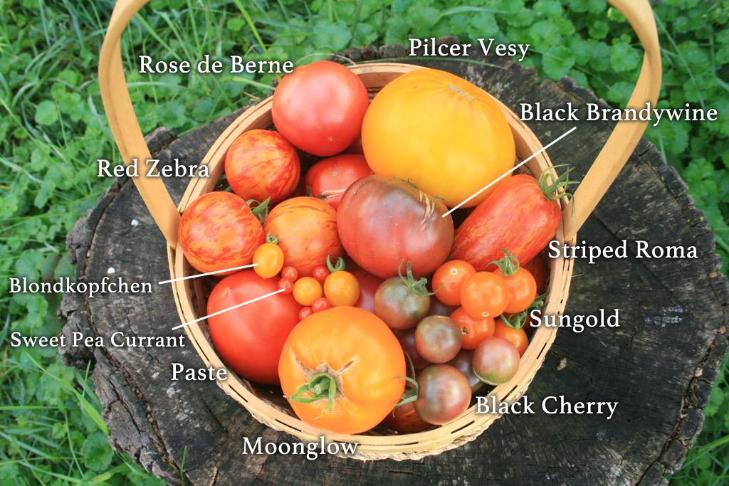 tomato-list