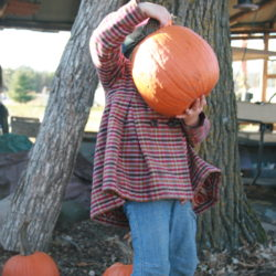 Nurtured by Nature Booklist: Too Many Pumpkins