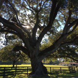 Great oaks from little acorns grow