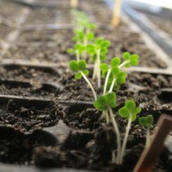 8 Reasons to Buy Seeds Instead of Transplants