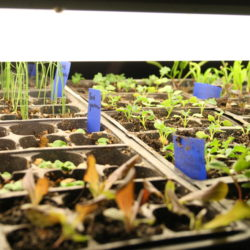 Guide to Seed Starting: Part 4 – Transplanting