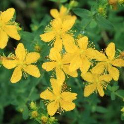 Medicinal Plants are Blooming