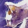 Katzen Irastra