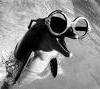 Professor Dolphin