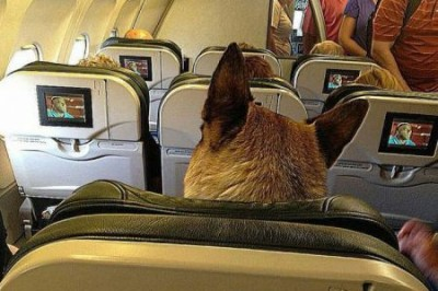 dog-in-seat