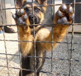 shelter-dog1