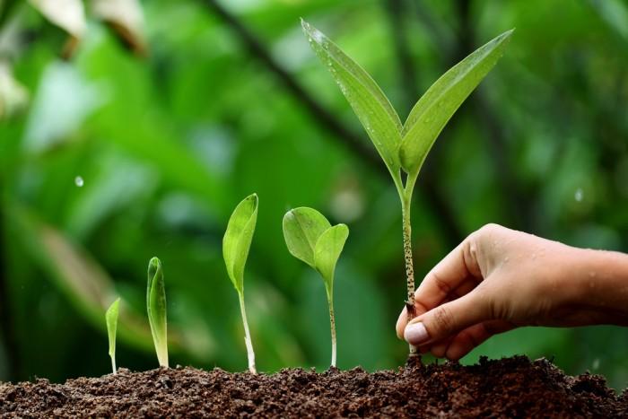 grow scale