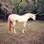 myths, unicorn