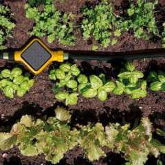 Just In Time For Summer, Edyn – The Tech Solution To Gardening Disappointment