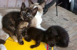 Gatitos para adopción