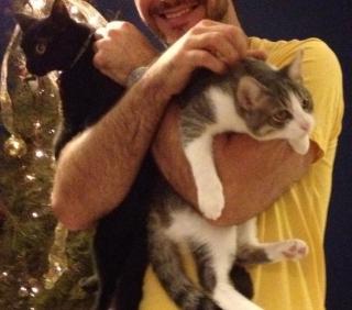 Dos cariñosos gatos para adopción