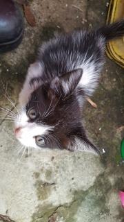 Gatito busca hogar seguro