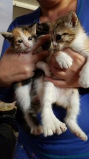 Adopción de gatitas