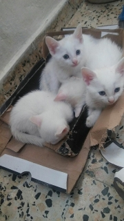 gatitos para regalar