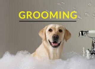 Grooming a domicilio