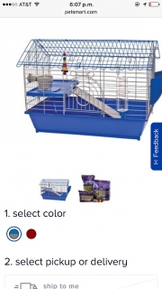 Guinea pig con su jaula