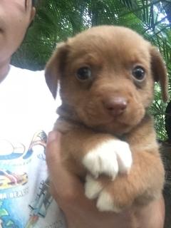 Se regalan perritos rescatados