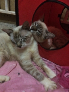 Adopta estos dos gatitos